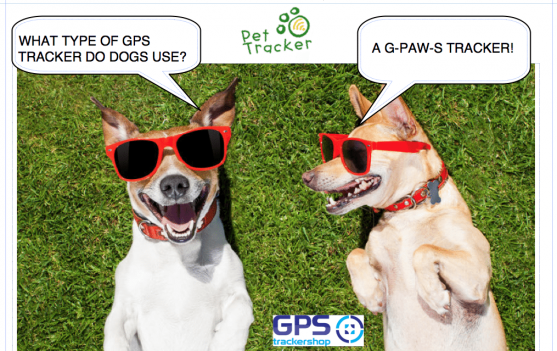 THE BEST GPS TRACKER FOR DOGS